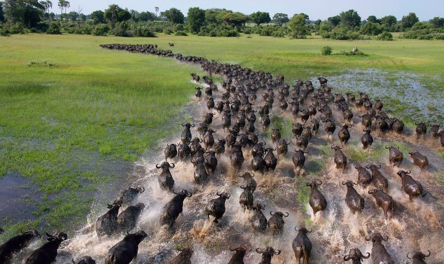 FOTO: Interesantne fotografije migracija životinja