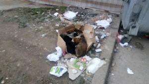 otpad-donje-rosulje1